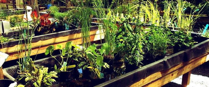 Russellu0027s Garden Center