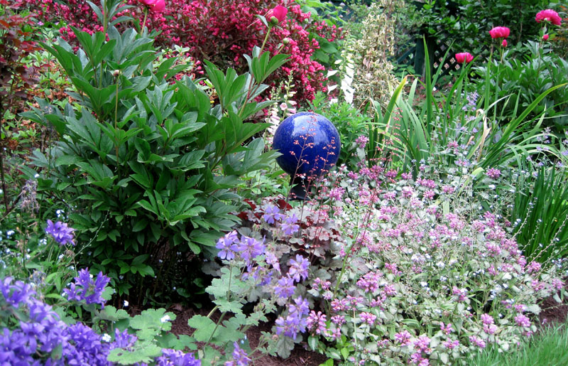 Id Rather Be Blue 10 Blue Perennials For Your Garden Enchanted