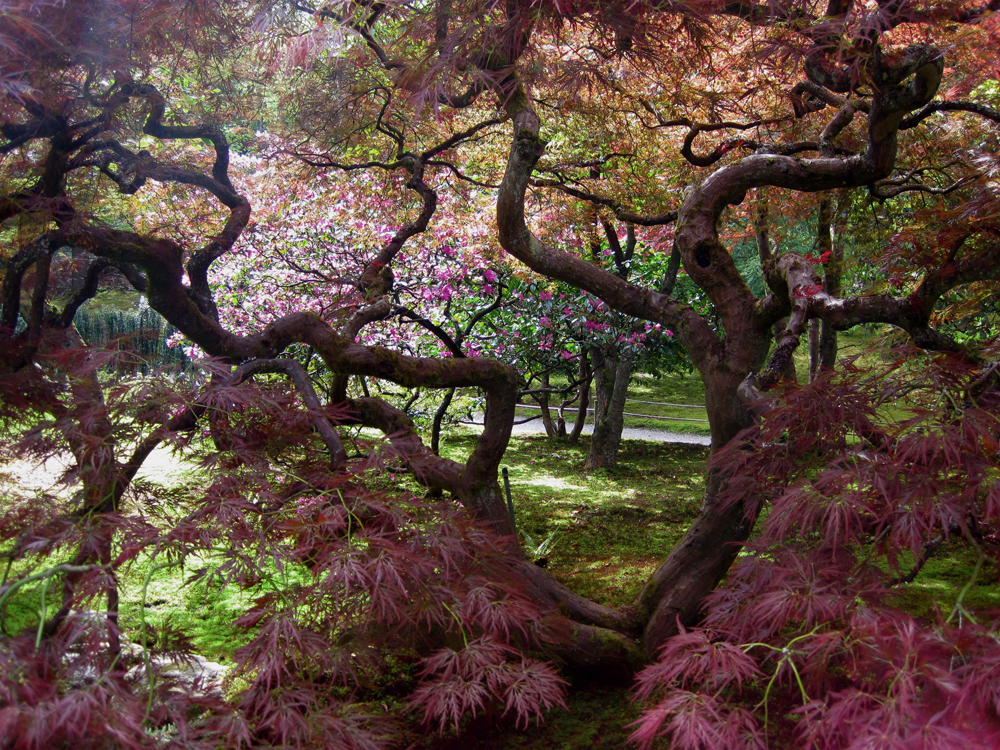 There Are Two Main Japanese Gardens In Seattle