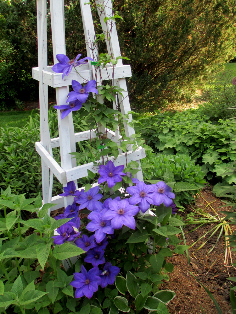 Climbing Vines Are Another Asset To A Layered Garden   They Add Height, But  Have A Small Footprint.