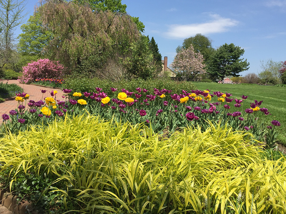 Mid-spring with tulips at Tower Hill Botanic Garden.