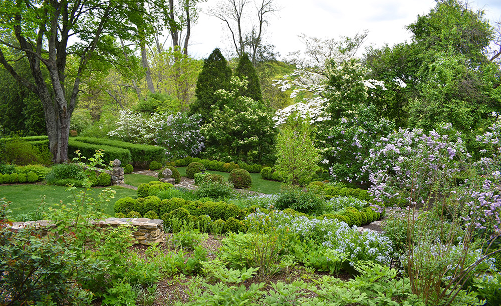 Garden in back of the house with amsonia, lilacs, boxwood