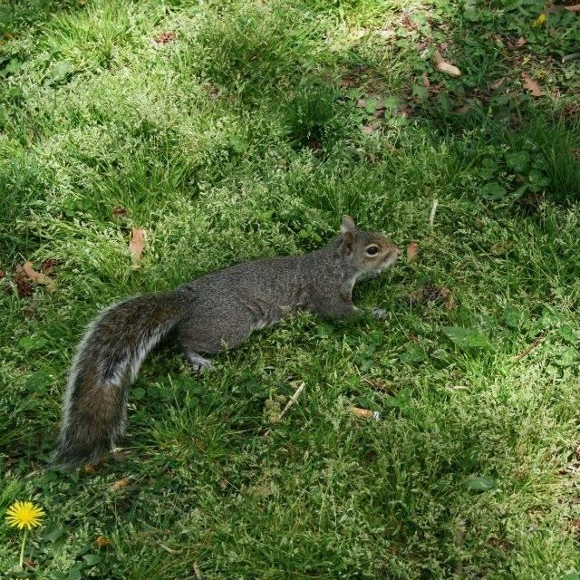 hello getaway, city guide, nyc, squirrel