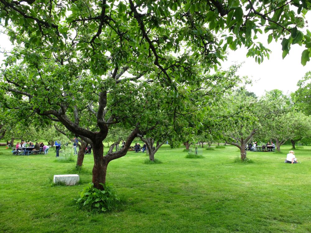 hello gtaway, stockholm, sweden, city guide, rosendals trädgård