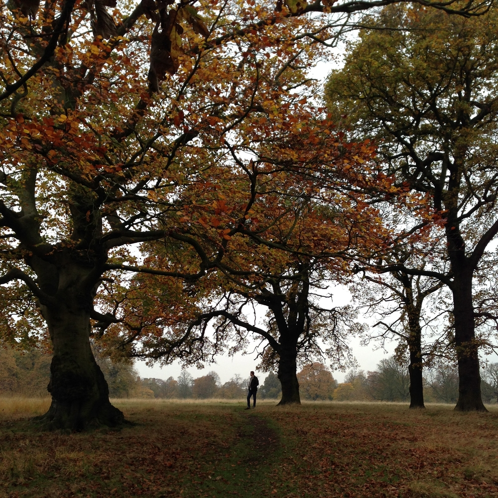 richmond park hello getaway city guide escape autumn london