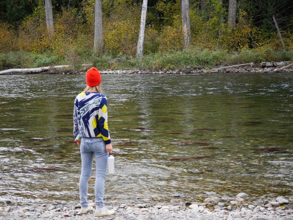adams river okanagan weekend guide
