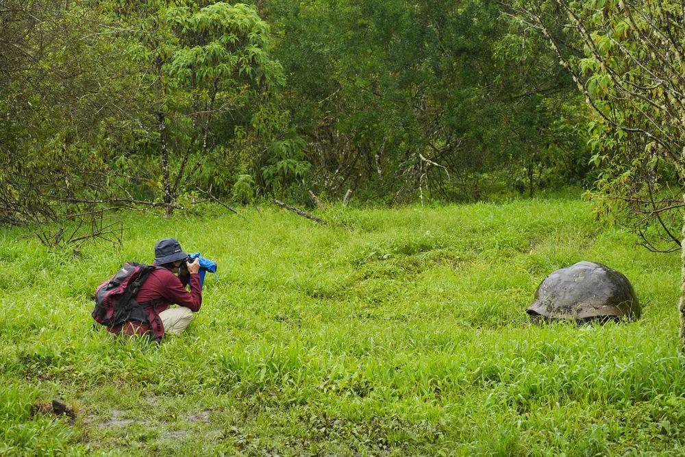 galapagos santa cruz tortoise