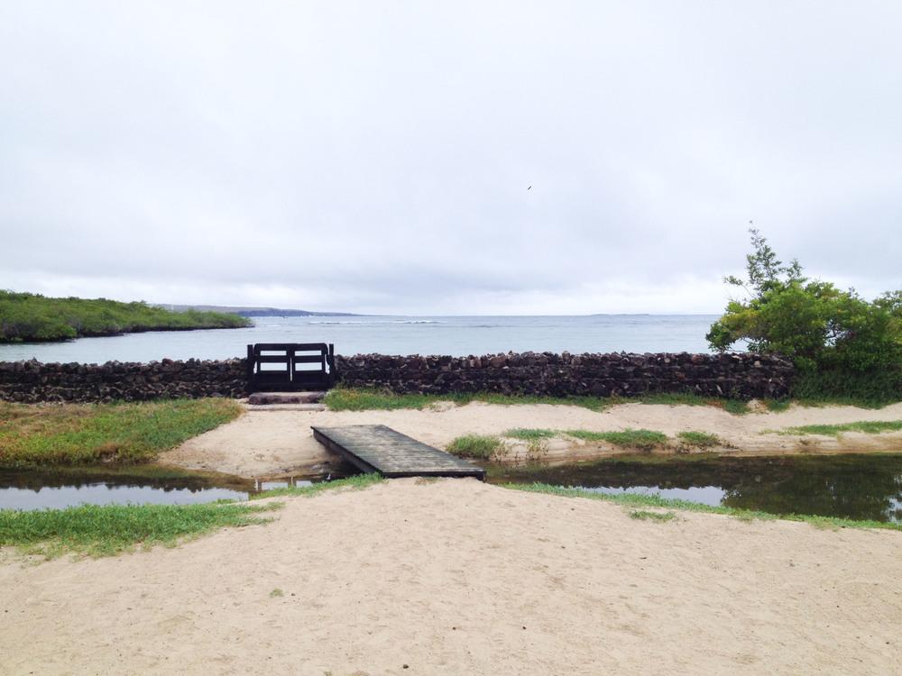 galapagos finch bay resort santa cruz