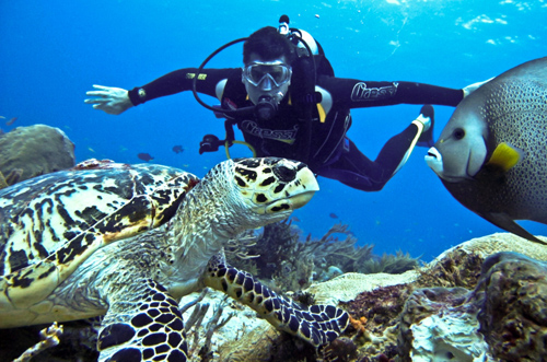 Introduction-to-scuba-diving.jpg