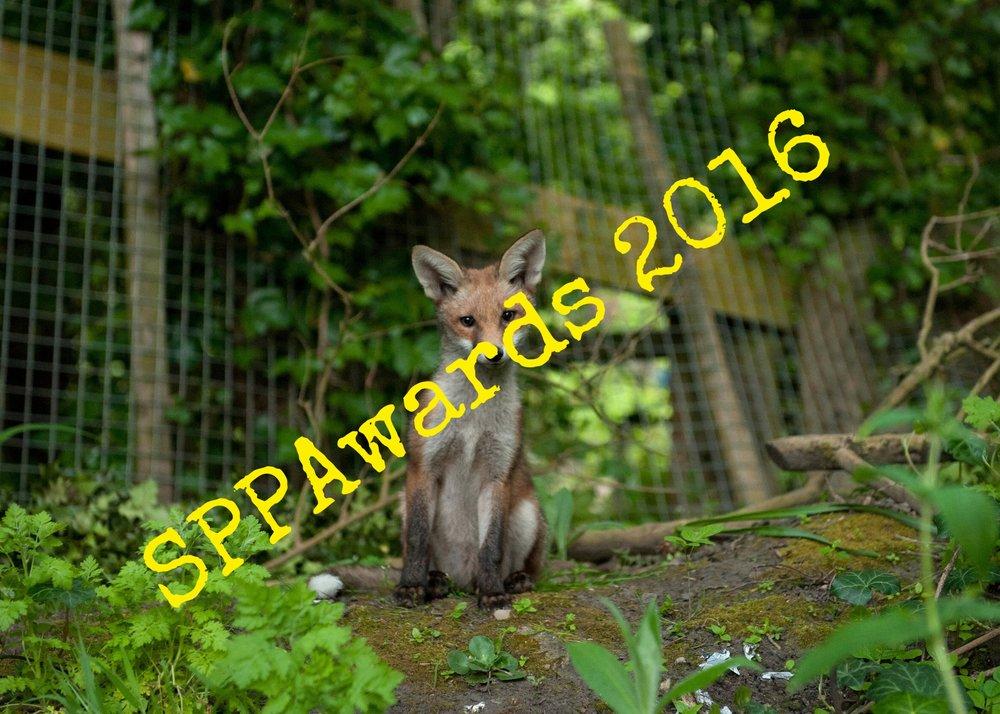 fox-cub-garden_nature-and-environment.jpg