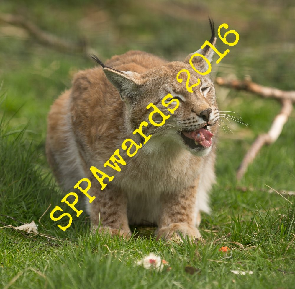 Nature & Environment - Lynx.jpg