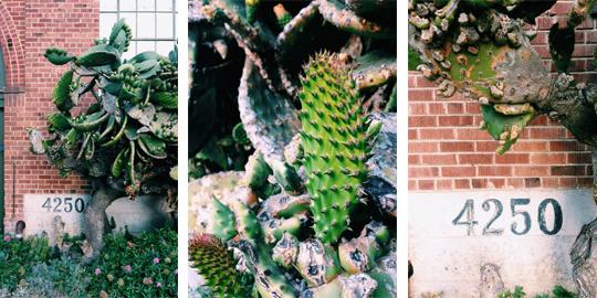 cactus psd
