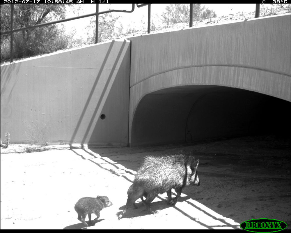 Twin Peaks Wildlife Crossing Structure.jpg