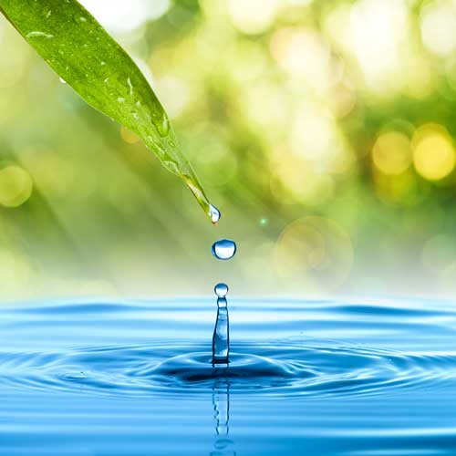 Water-from-leaf.jpg