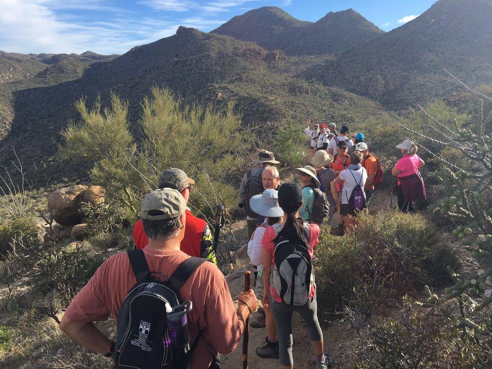 Guided Hike in Tortolitas