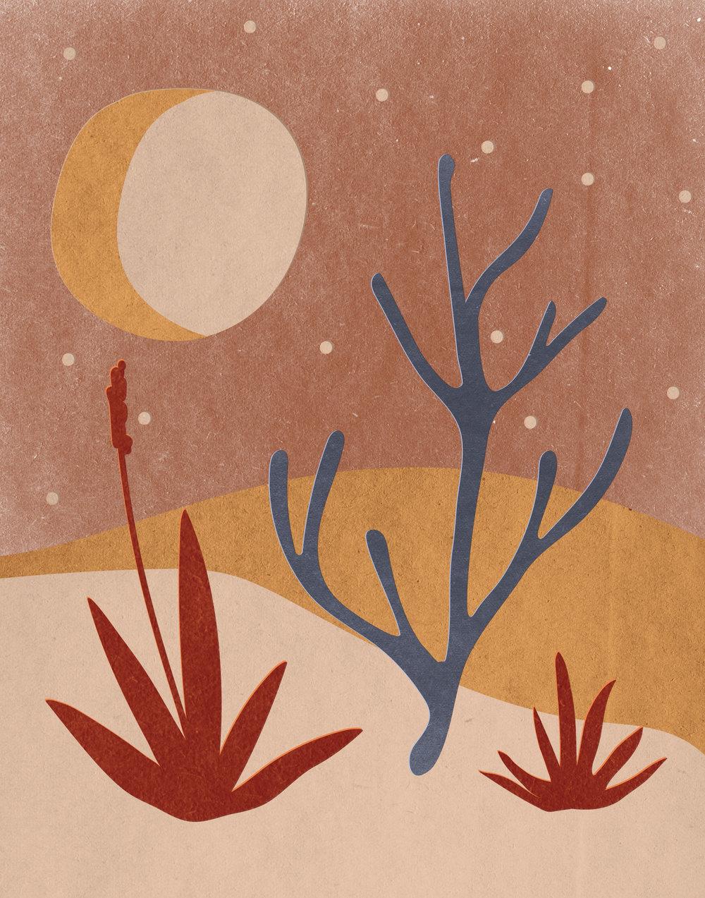 cactus-scape-01.jpg