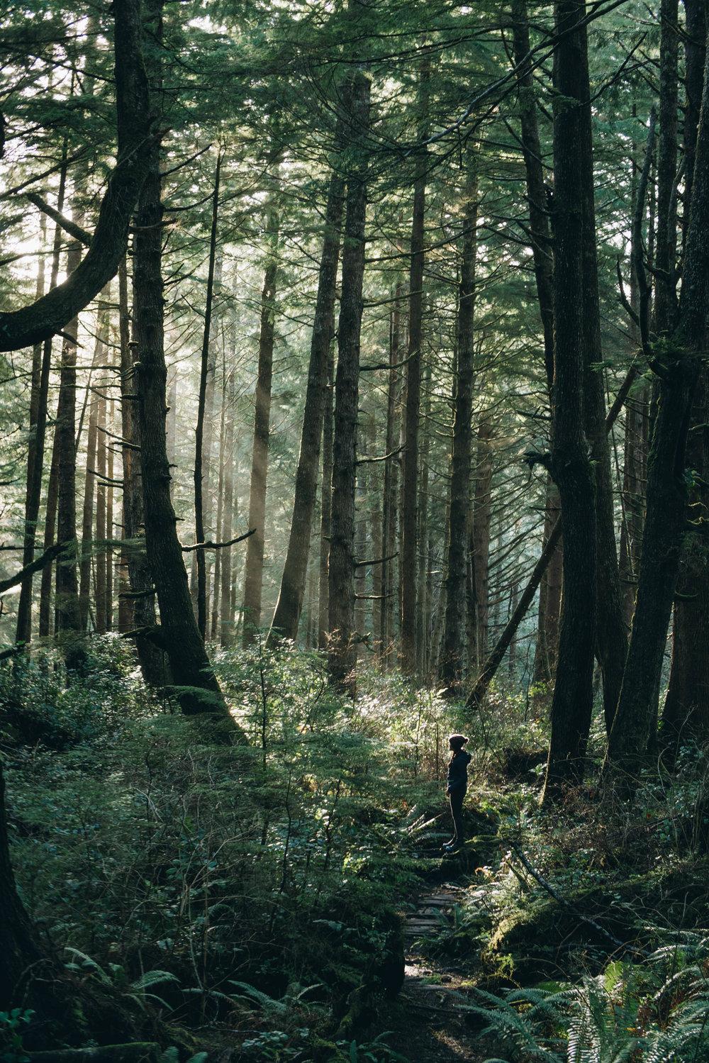 Forest_walk-2.jpg