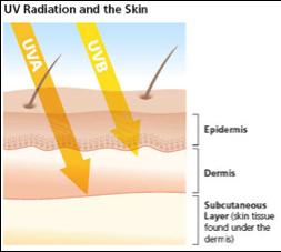 http://www.skincancer.org/prevention/uva-and-uvb/understanding-uva-and-uvb