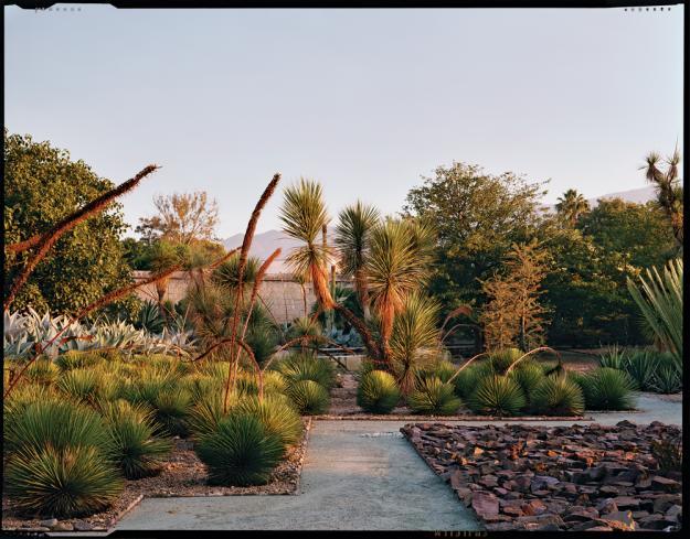 Discoveries jardin ethnobotanico de oaxaca paiko for Jardin oaxaca