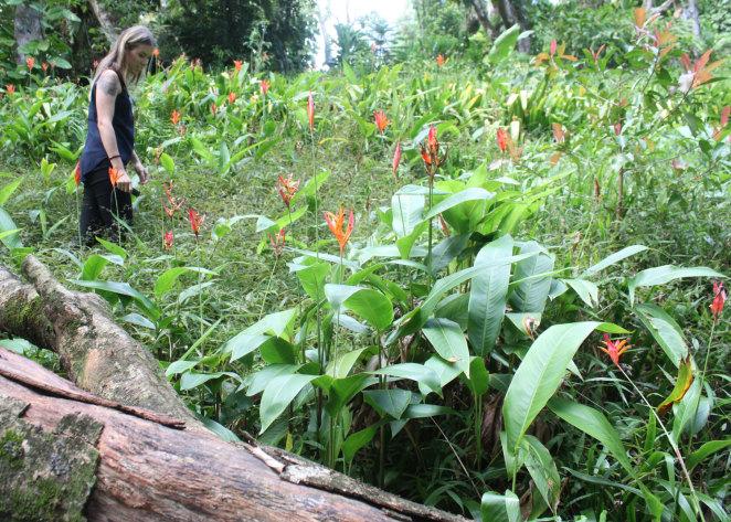 Rachel amongst Heliconia