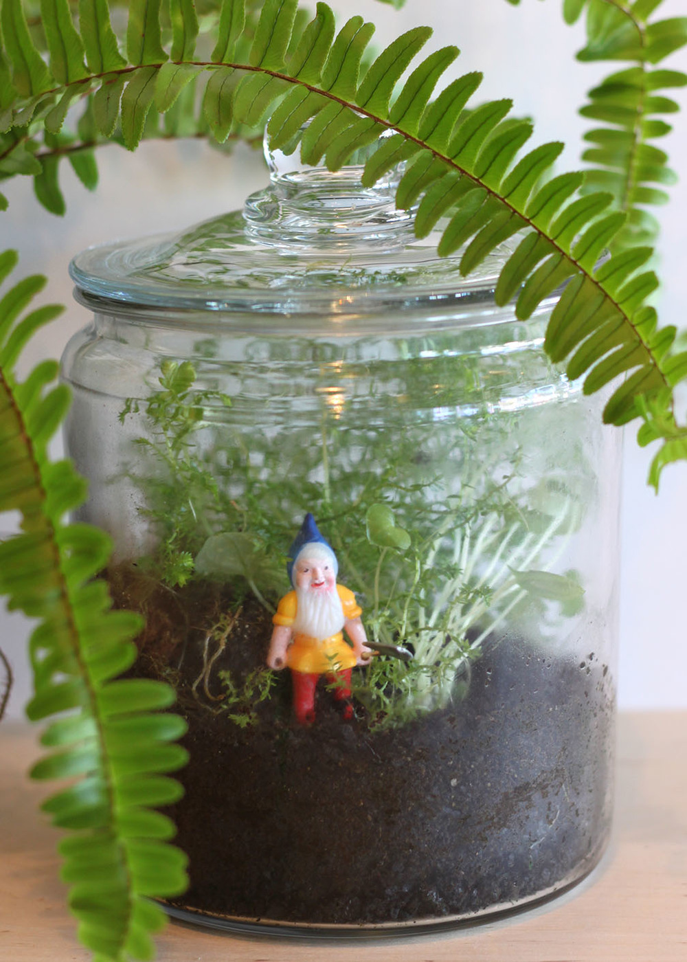 Paiko fern moss terrarium workshop