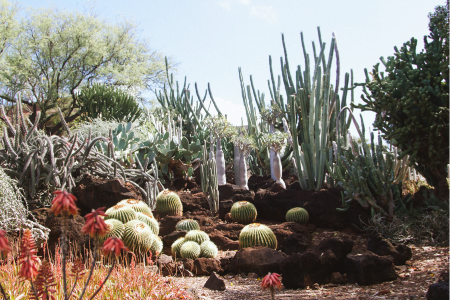 the cactus garden at kcc  paiko, Beautiful flower