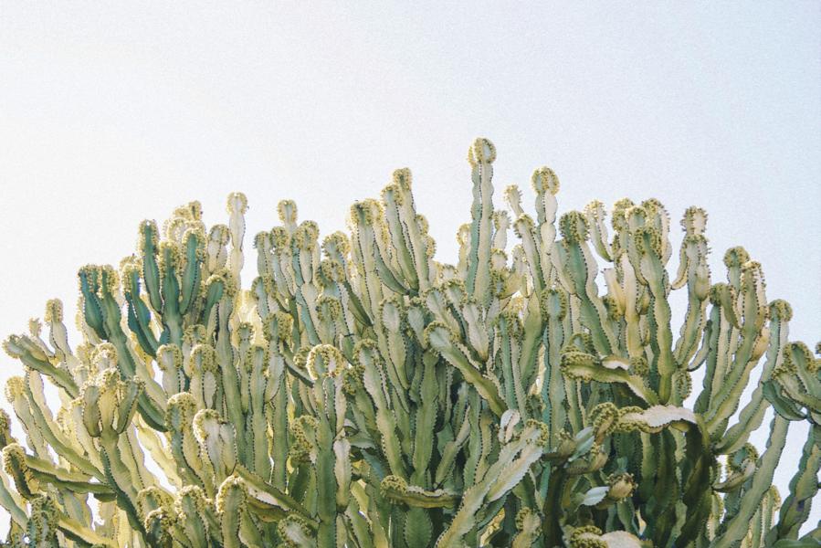 paiko kcc cactus garden 2