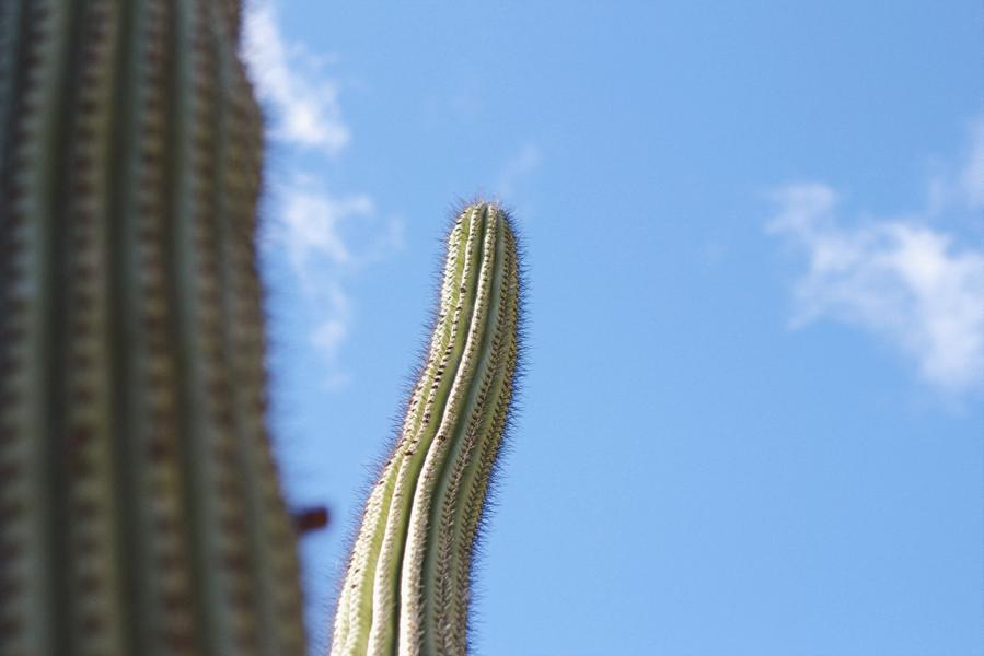 paiko kcc cactus garden 4