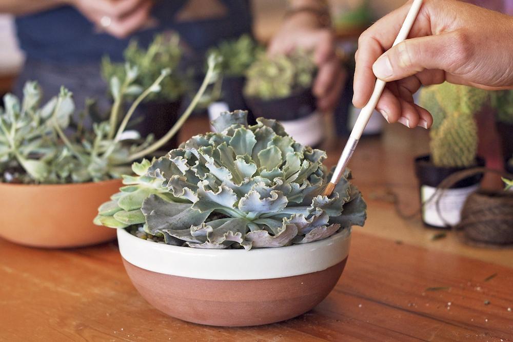 paiko succulents