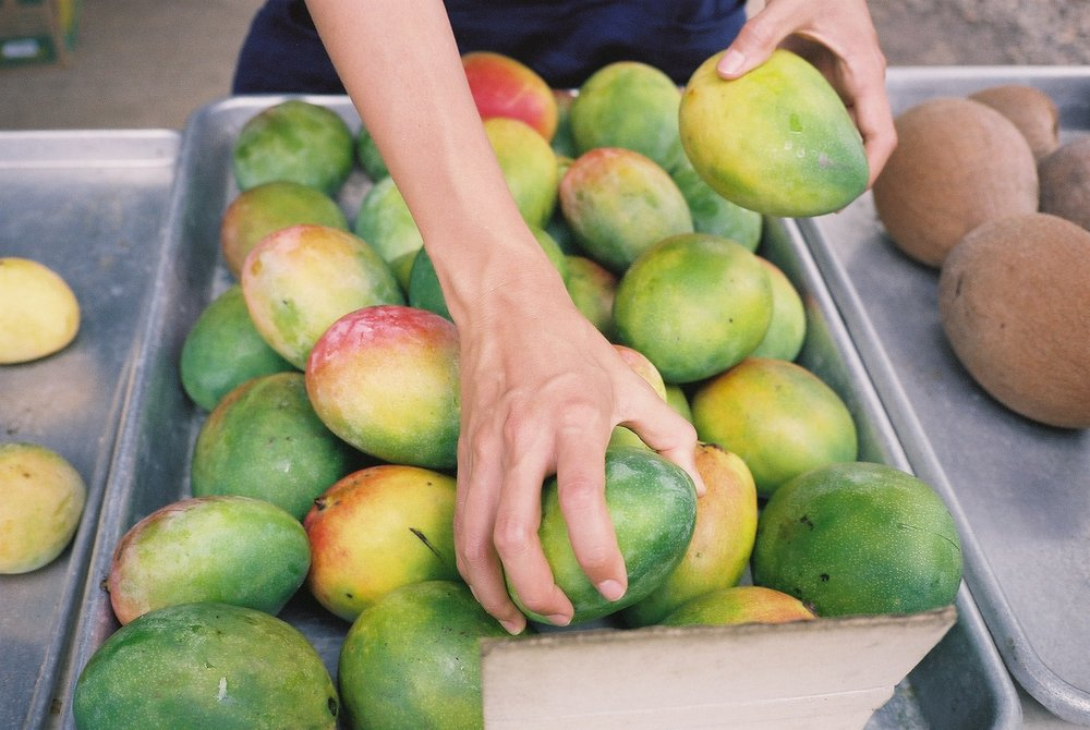 Keitt mangos in tray.