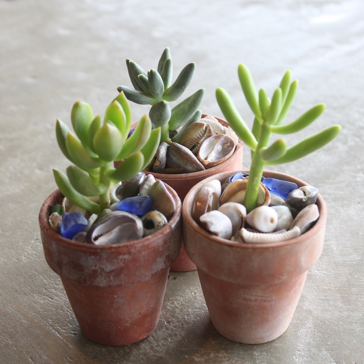Beachy mini succulent party favors!