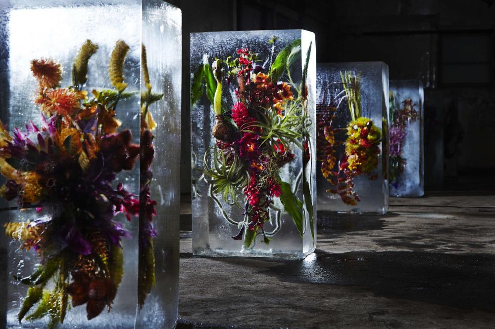 Iced Flowers, 2014