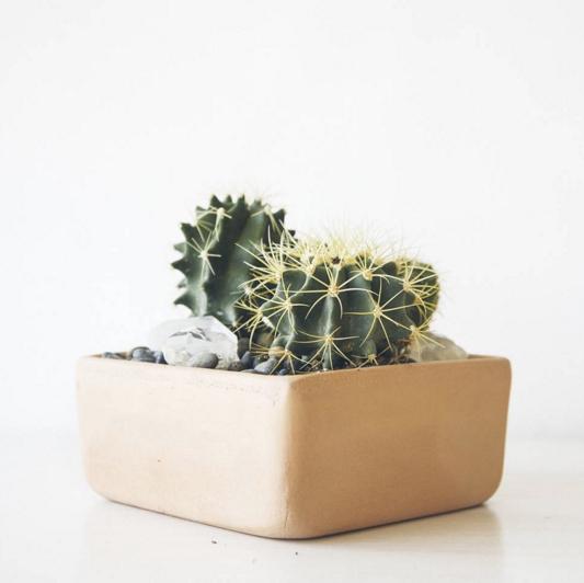 paiko succulents hawaii