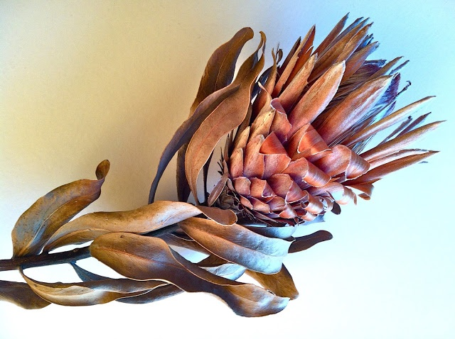image from http://swallowsnestfarm.blogspot.com/2012/05/drying-proteas.html