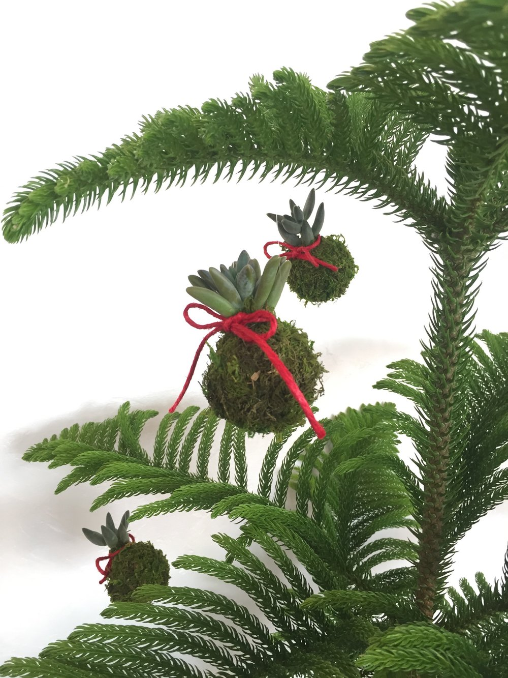 paiko kokedama ornament