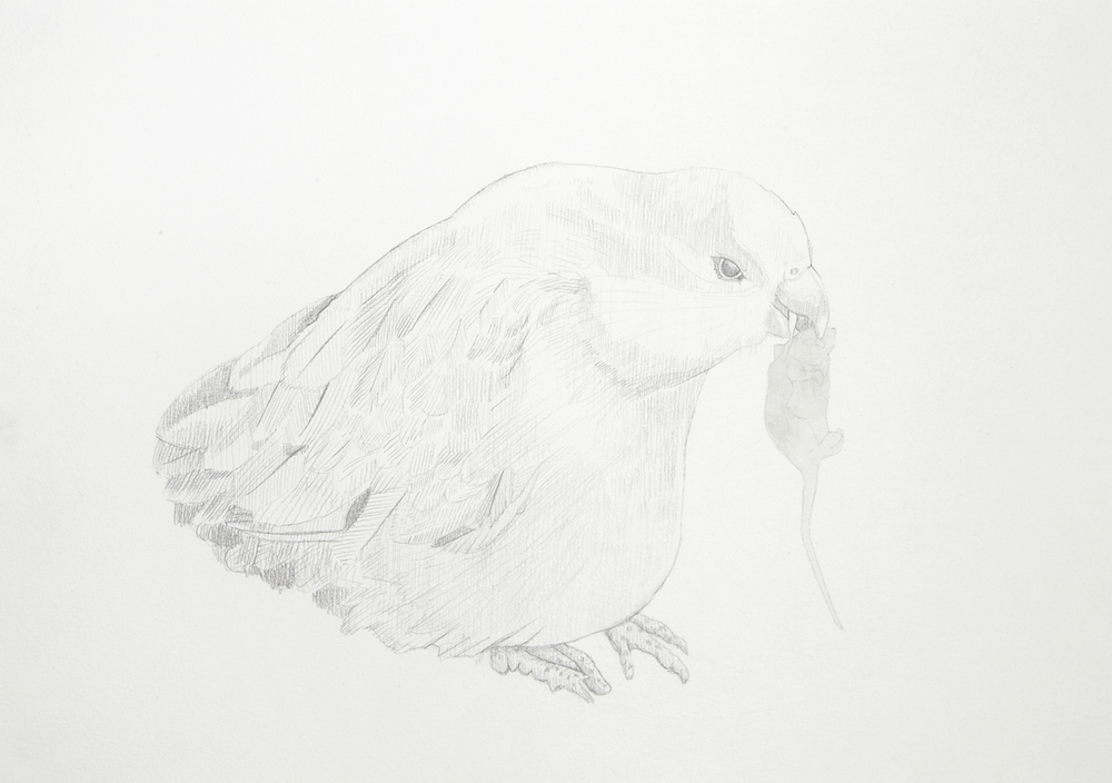 Vampire Bird #1, 2012, Watercolour and pencil on paperPlateau, 2012, Watercolour and pencil on paper, 29.0 x 42.0 cm, Photo: Sam Scoufos