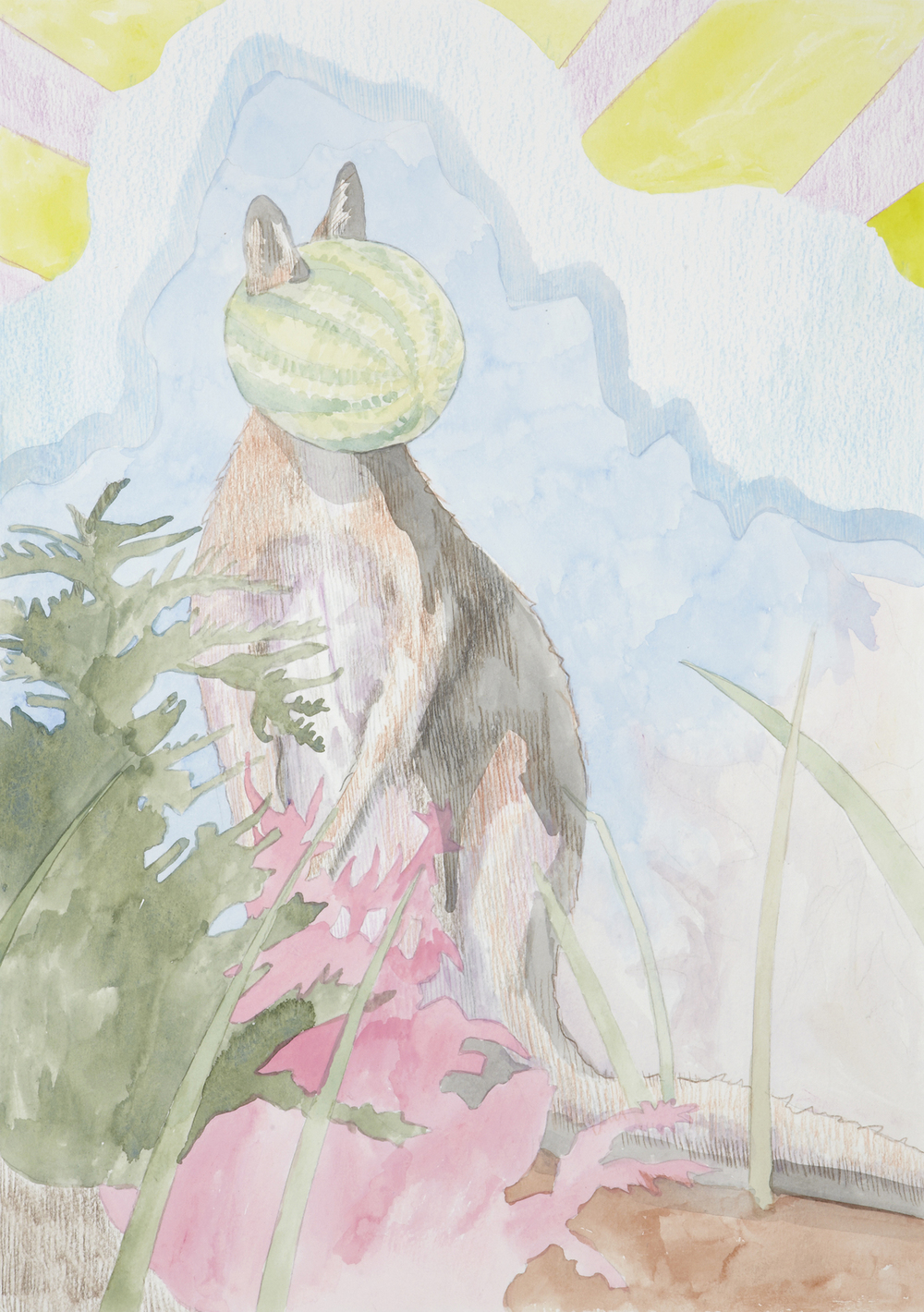 Pademelon #3, 2012, Watercolour and pencil on paper, 29.7 x 42.0 cm, Photo: Sam Scoufos