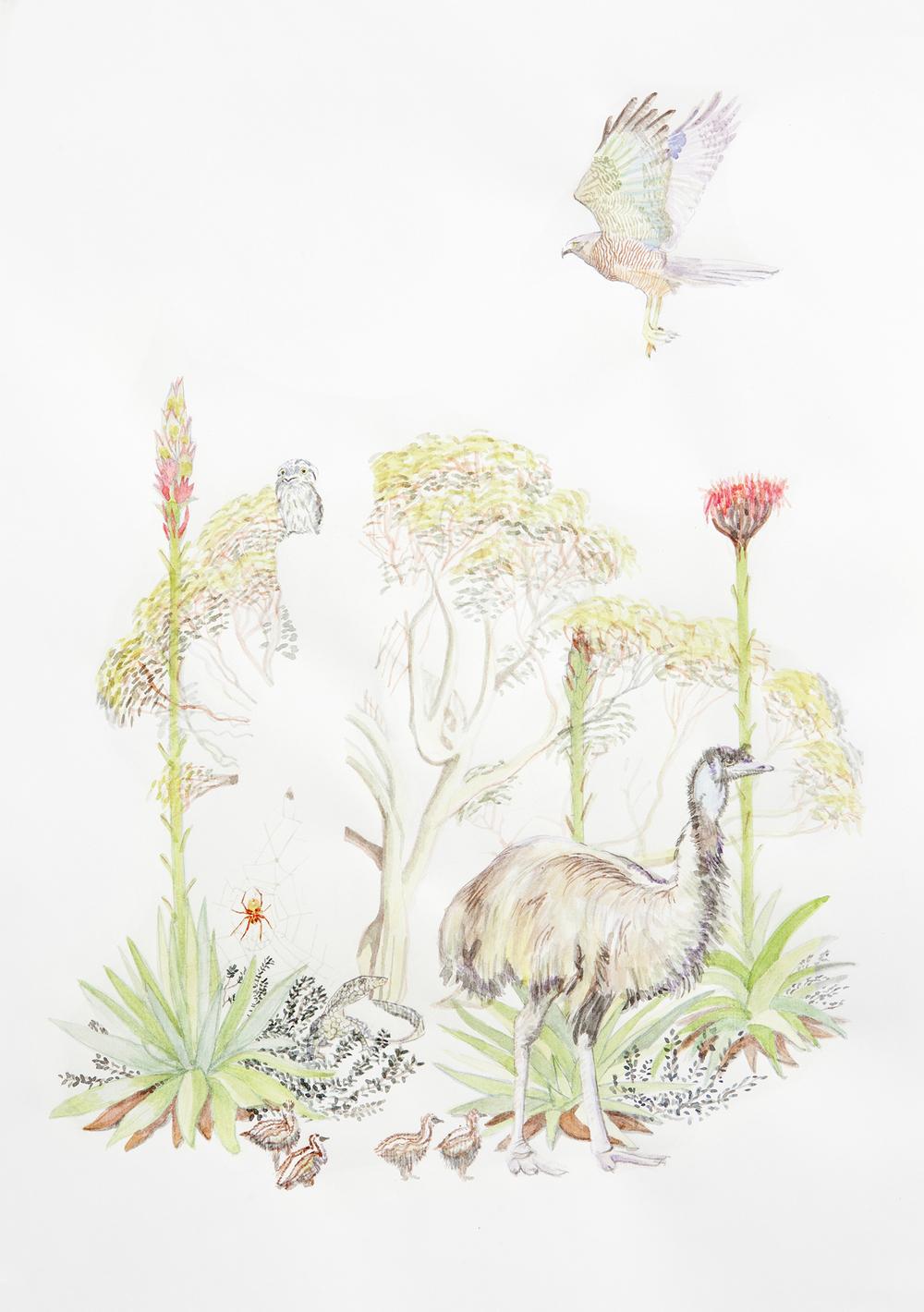 Australian at Heart? #2, 2011, Watercolour on paper, 21.0 x 29.5 cm, Photo: Sam Scoufos