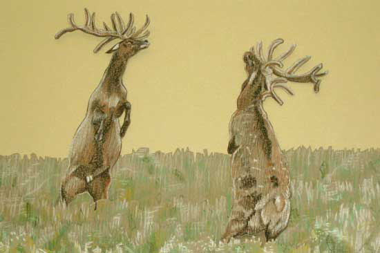 Deer, 2008, Pastel on card