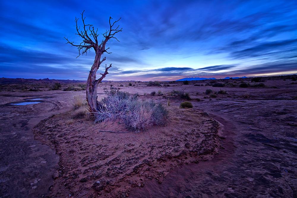 Arches Tree SR V1.jpg