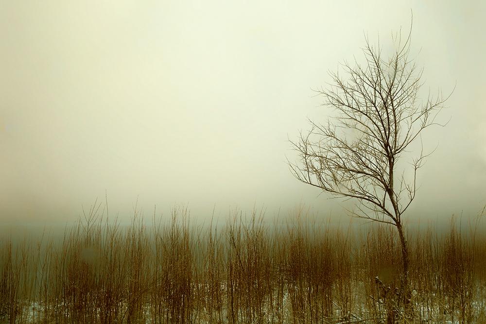 Highland Tree.jpg