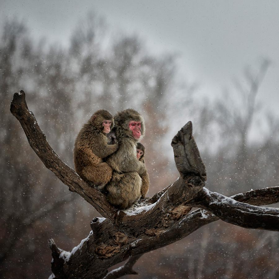 Monkey-Family.jpg