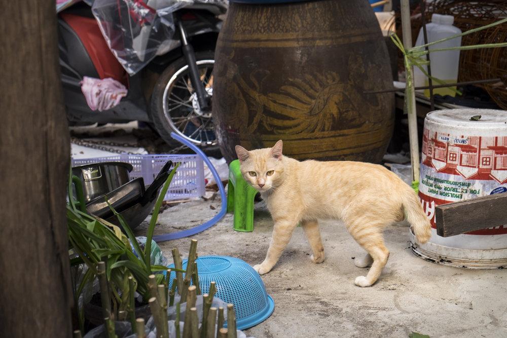thailandWEB_katfrymoyer-12.jpg