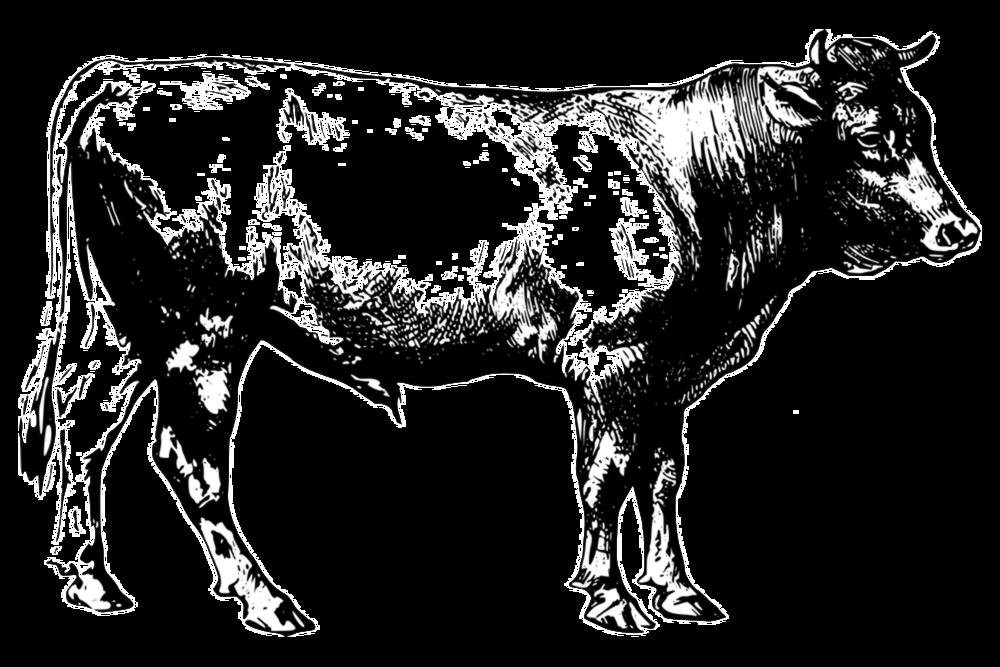 Steer.png