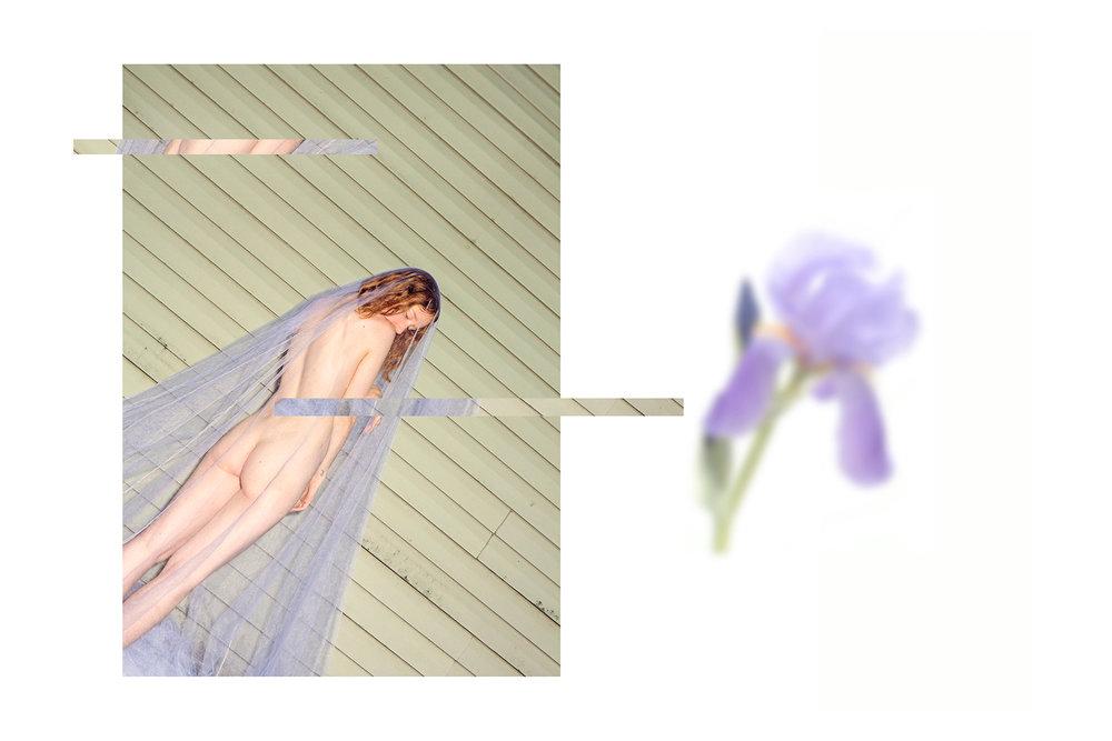 iris mix.jpg