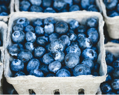 Blog graphic 500 x 400 Punnets of blueberries.png