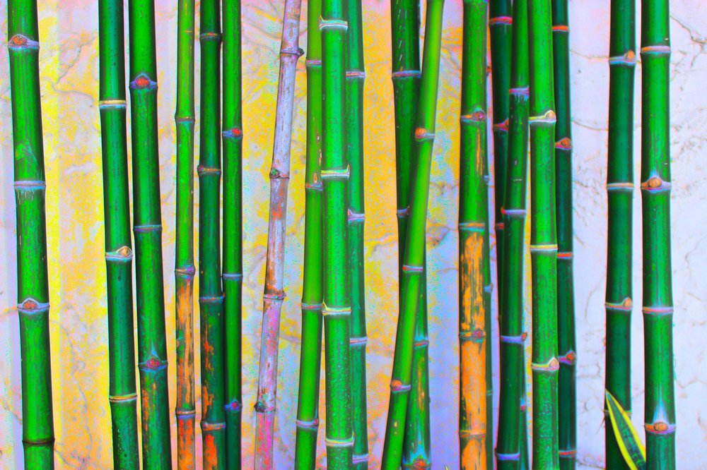 bamboo-pic for social media.jpg