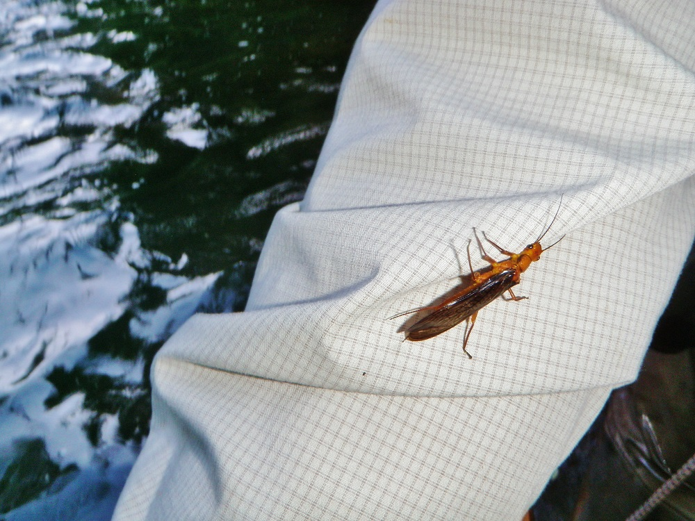 Then There's Some Salmonfly Love Too