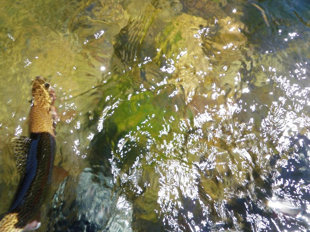Where's Da Fish?