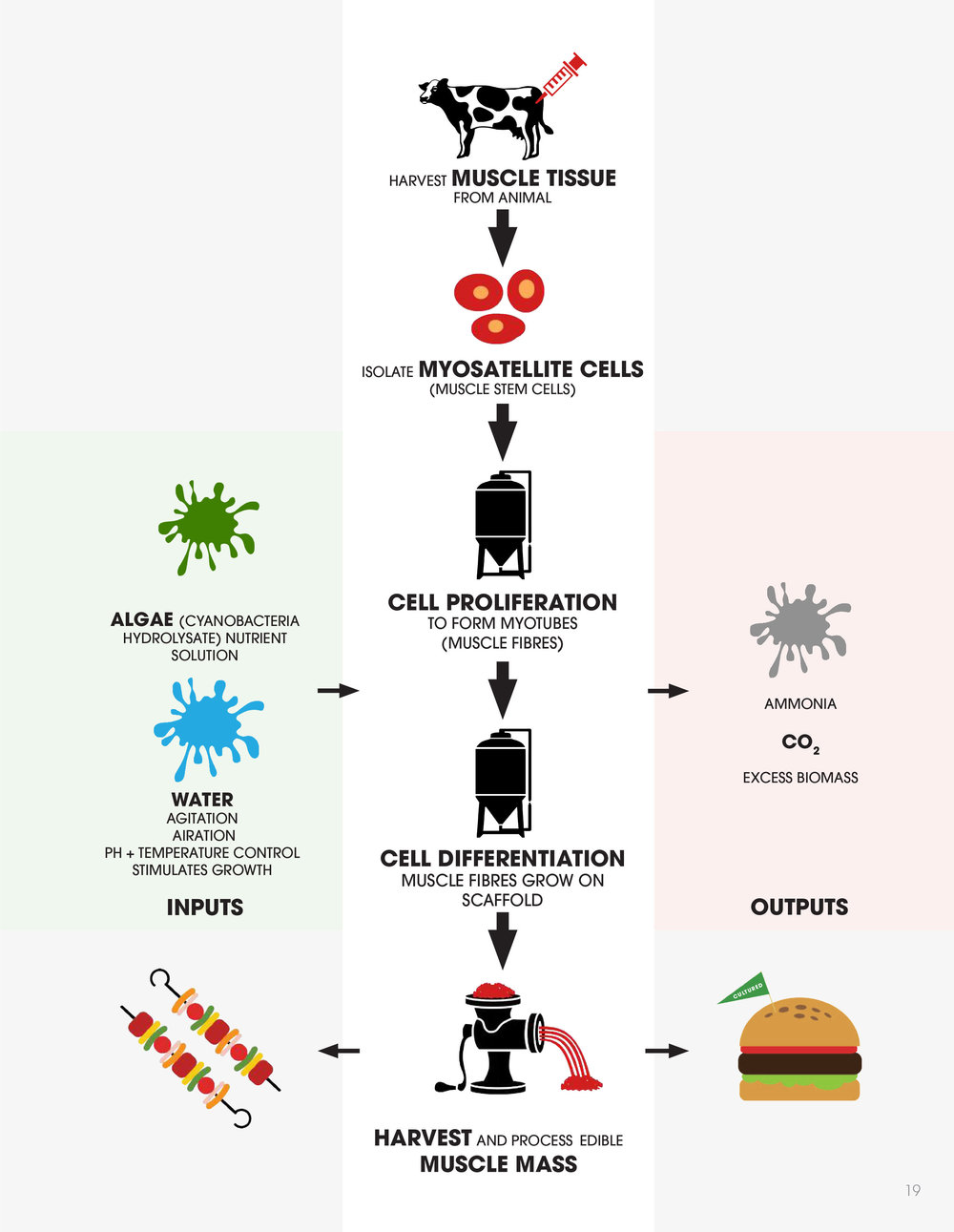THE CULTURED MEAT PROCESS